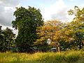 0434jfHoly Cross Parish Church School Sunset Barangay Caloocan Cityfvf 10.JPG
