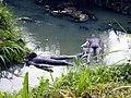 0881 sculptures de Malam dans l'eau.jpg