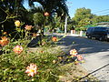 09668jfCuyapo Welcome Districts Roads Parks Center Nueva Ecijafvf 21.JPG