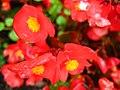 1301 - Zell am See - Flowers.JPG