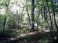 165 Letni Buk Zwyczajny w rajczywcu Rajczywiec gmina Drawsko - panoramio.jpg
