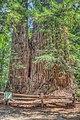 16 21 0022 redwood.jpg