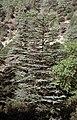 186Zypern Troodos Zedertal (14111447202).jpg