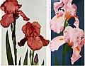 1959 Cooley's Gardens (1959) (16463511227).jpg