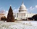 1981 U.S. Capitol Christmas Tree (31432740120).jpg
