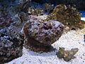 20080113 Aquatopia - Rivierenhof (067).jpg
