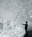 2010 Snowflake 01.jpg