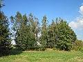 20120922Betula pendula.jpg