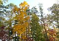 2012 Fall Color in the Chattahoochee National Forest (8113846388).jpg
