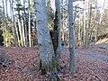 2017-11-24 (122) Way from Haltgraben to Grüntalkogelhütte, Austria.jpg