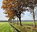 20191017 Hambroeksdijk nabij Gasselte.jpeg