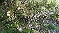 25 fontes levada madeira - panoramio - azoren66.jpg