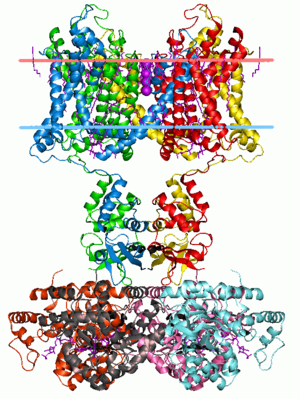 Membrane protein - Crystal structure of Potassium channel Kv1.2/2.1 Chimera. Calculated hydrocarbon boundaries of the lipid bilayer are indicated by red and blue dots.