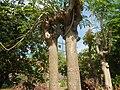 3428Poblacion, Baliuag, Bulacan 54.jpg