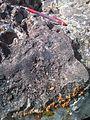 8-50 close to pawprint surface ablation - panoramio.jpg