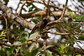 A Bird in Wilpattu National Park 09.jpg