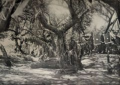 A Holy Tree of Great Age. (1918) - TIMEA.jpg