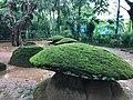 A Kudakkallu site, Megalithic umbrella stones Ariyannur Kerala, pre 1000 BCE.jpg