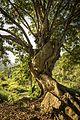 A Pedra na Àrvore.jpg
