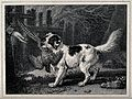 A dog retrieving fowl to its owner. Lithograph by J. Ward. Wellcome V0021841.jpg