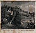 A girl with a basket gathering mushrooms in a watermeadow. E Wellcome V0025650.jpg
