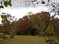 A passeggio nel Bosco...le mie scarpinate - panoramio (4).jpg