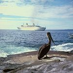 A pelican on the Galapagos Islands, with Kungsholm in the background (5074437339).jpg