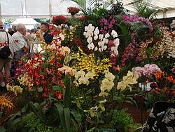 definition of orchidaceae