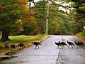 Acadia National Park (8111139415).jpg