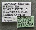 Acromyrmex heyeri casent0173795 label 1.jpg