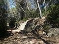Aflorament granític en una pista entre el cementiri de Roques Blanques i la cantera Berta P1510028.jpg