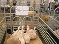 AgroBalt 2012 - zasys.JPG