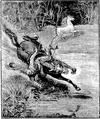Aimard - Les Chasseurs d'abeilles, 1893, illust page 181.png