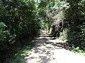 Alameda Cândido Brasil Moro - Palma - Santa Maria, foto 05 (sentido N-S).jpg - panoramio.jpg