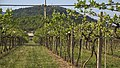 Allegrini vinyard, Fumane, Verona, Veneto, Italy - panoramio.jpg