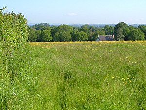 Aller Grove - Image: Aller Grove from Woodhayes Lane geograph.org.uk 178289