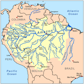 The basin of the mighty Amazon River is a system made up of many tributary streams. The streams shown on the map besides the Amazon are tributaries of the Amazon. The Amazon is not a tributary of any other rivers because it ends in the Atlantic Ocean.