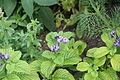 Amboise, fleur d'un parterre 8.jpg