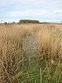 An overgrown drain - geograph.org.uk - 1216045.jpg