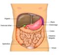 Anatomy Abdomen Tiesworks-es.png