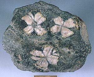 Andalusite (Chiastolite)4.jpg