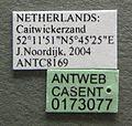 Anergates atratulus casent0173077 label 1.jpg