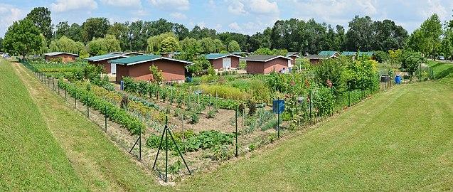 jardin bordure
