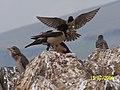 Ani fırtına kuşları.jpg