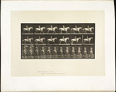 Animal locomotion. Plate 582 (Boston Public Library).jpg