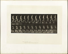 Animal locomotion. Plate 83 (Boston Public Library).jpg