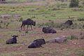 Animals at Pilanesberg National Park 6.jpg