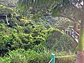 Antigua Zipline ravine on Fig Tree Drive - panoramio.jpg