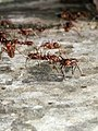 Ants Colony, 25112015.jpg