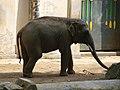 Antwerp Zoo (12210605255).jpg